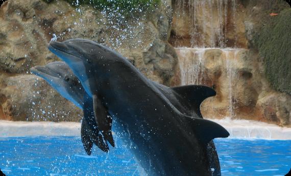 delfinaria